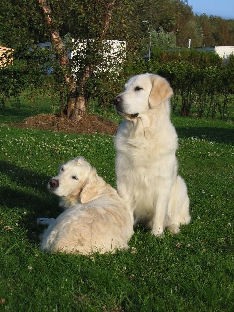 MAYNE ROLAND - Kennel - Royal Canin - Fokkers