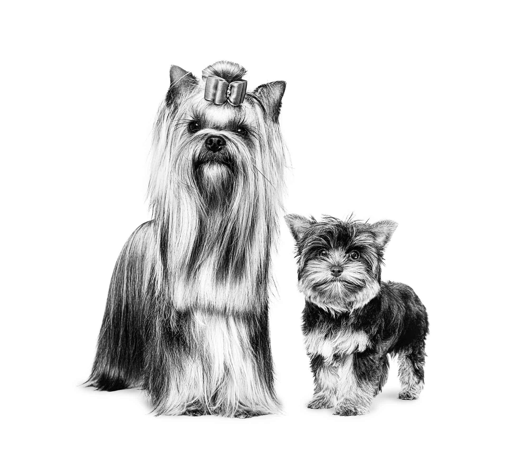 Je hond borstelen: hoe moet dat eigenlijk?