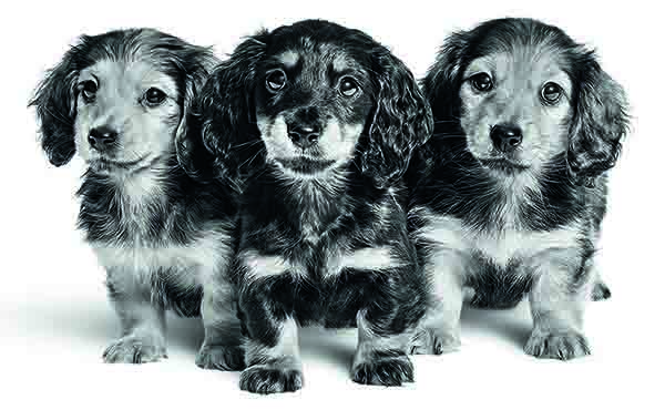 De 'juiste' pup kiezen
