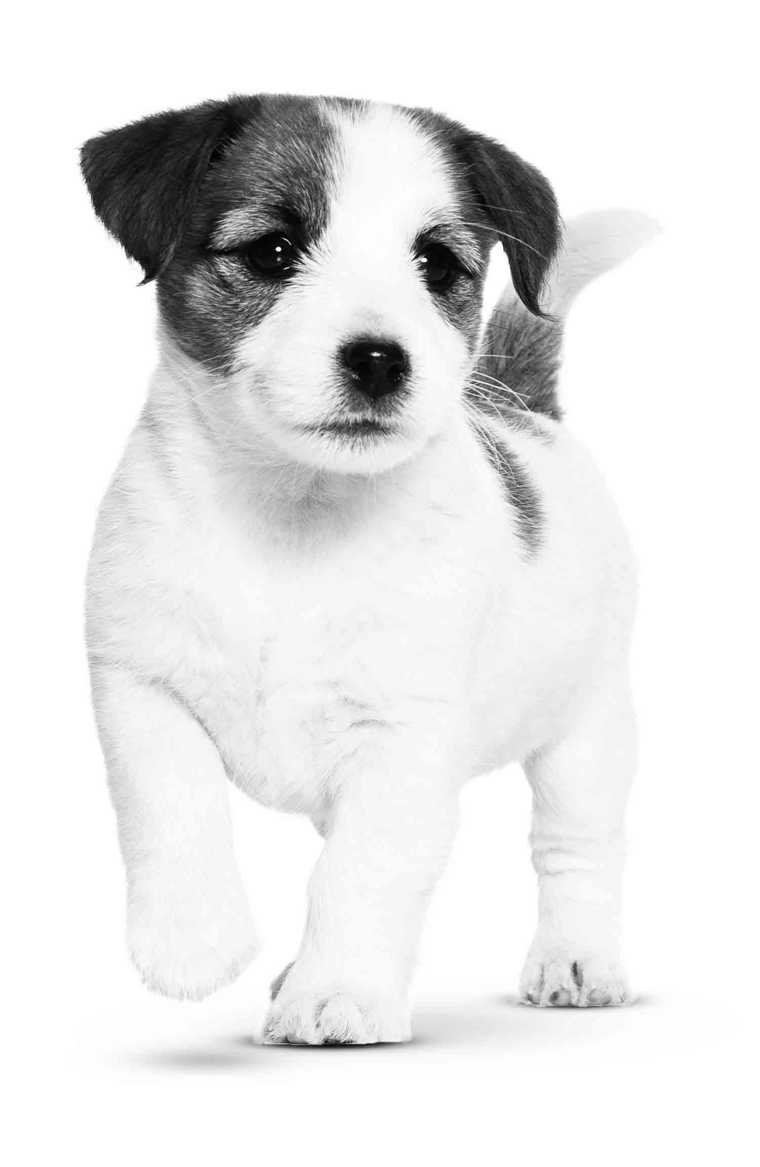 Training en opvoeding van de pup