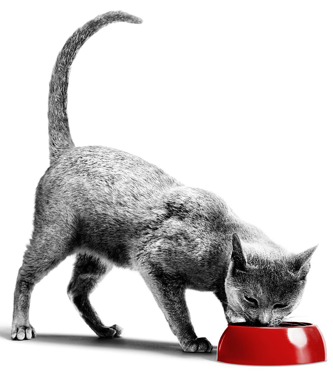 Quel est le meilleur aliment pour mon chat ?