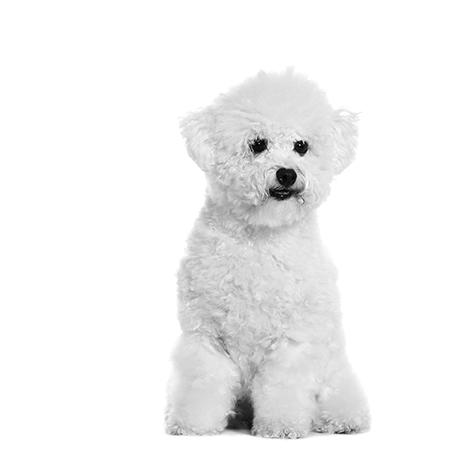 À quelle fréquence dois-je emmener mon chien chez le vétérinaire ?