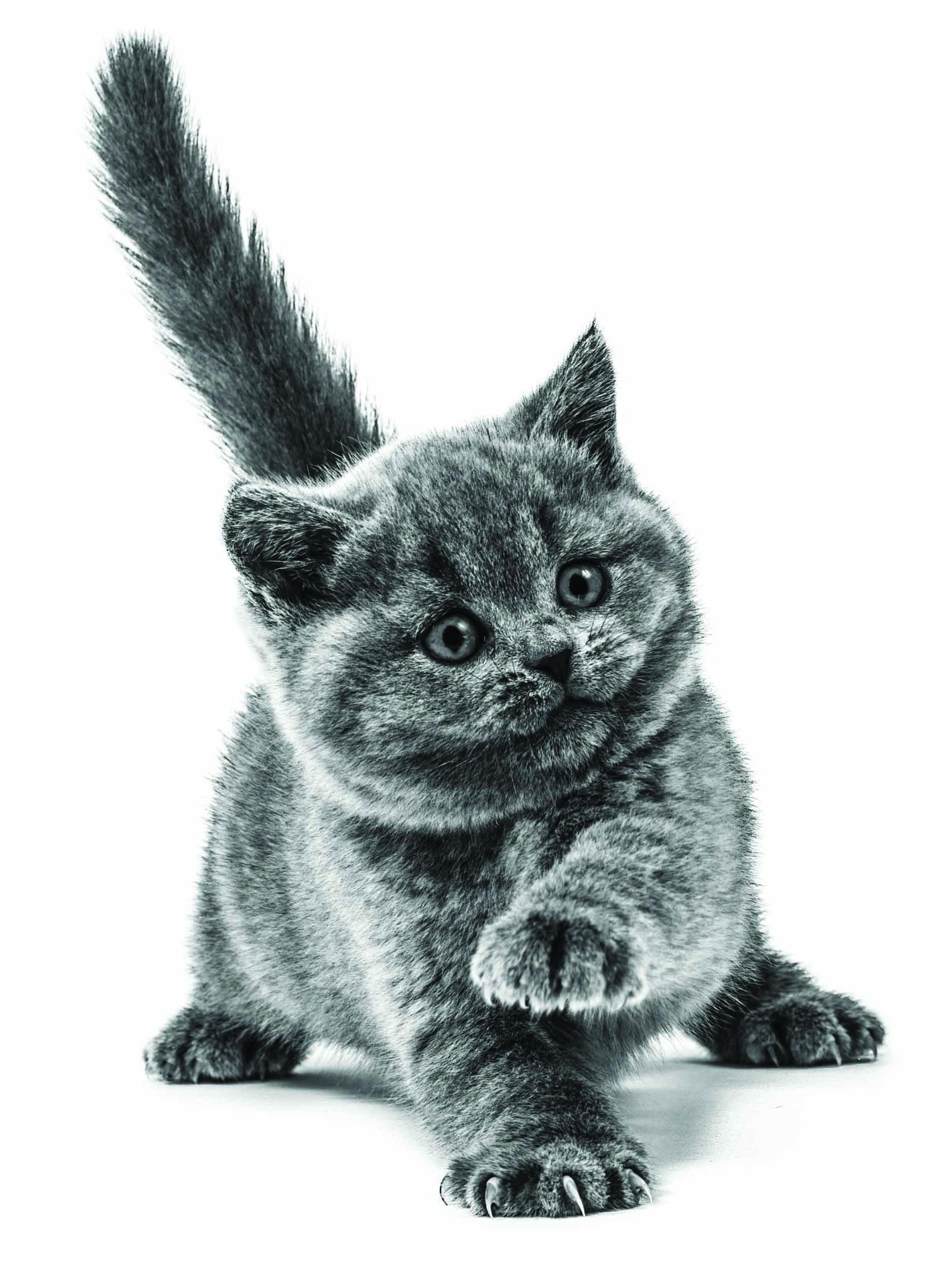 Les avantages de faire stériliser ou castrer votre chaton