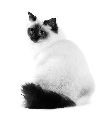 Les besoins nutritionnels des chats castrés et chatte stérilisés sont bien particuliers.