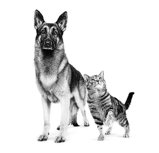 Aliments toxiques pour les chiens et les chats