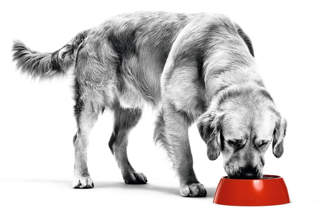 Au secours, mon chien quémande de la nourriture !