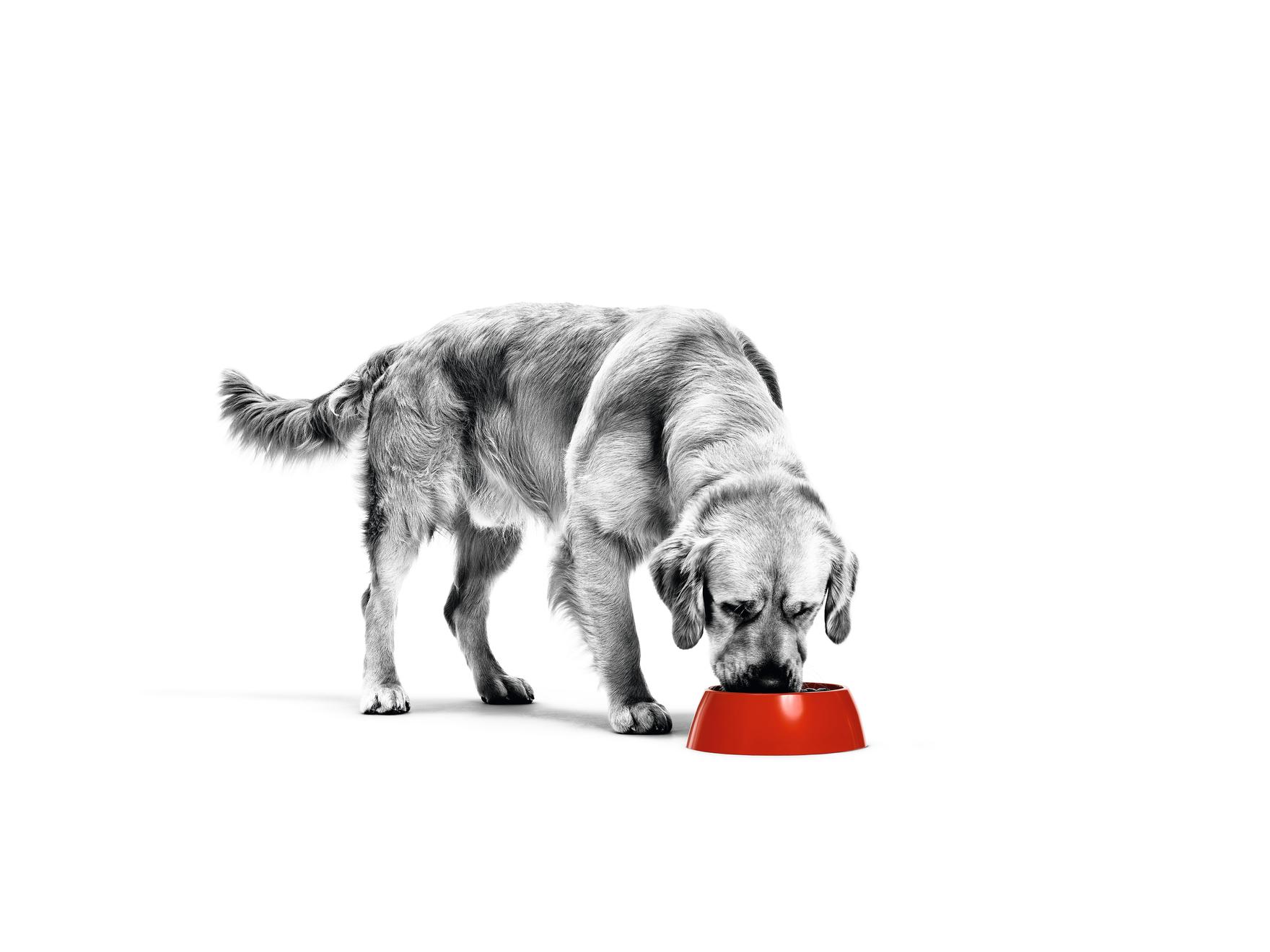 Quelle quantité de nourriture puis-je donner à mon chien ?