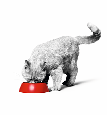 Au secours, mon chat quémande de la nourriture !