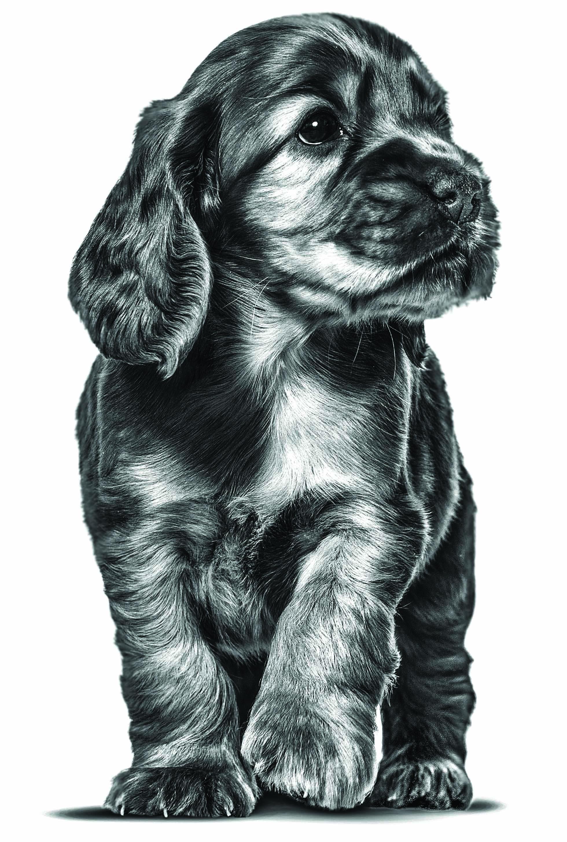 Hoe krijg ik een sociale pup?