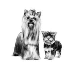 Brossage du chien : comment procéder ?