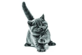Au secours, mon chat ou mon chien a des puces! Que faire?