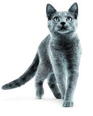Puces chez le chat : désagréables & dangereuses !