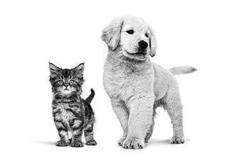 Ontdek de nutritionele behoeften van uw pup of kitten.