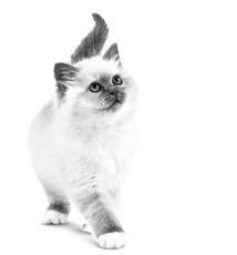 Liste de contrôle chaton