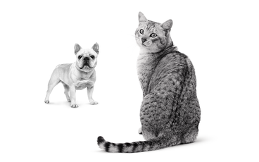 ROYAL CANIN® – Priorité a l'animal
