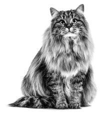 À l'aide, mon chat souffre de boules de poils !