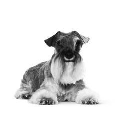 Welke voeding moet ik mijn hond geven als hij ouder wordt?