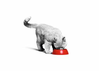 L'alimentation de votre chaton de la naissance à l'âge adulte