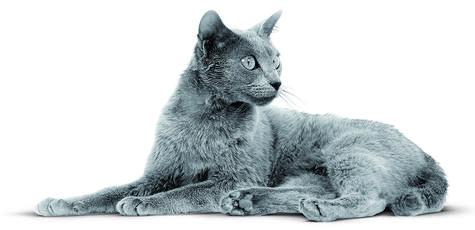 Pourquoi l'alimentation d'un chaton est différente de celle d'un chat adulte?