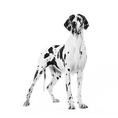 Waarom krijgt een pup andere voeding dan een volwassen hond?