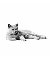 Conseils pour éviter le surpoids de votre chat
