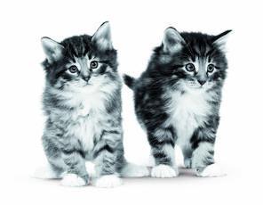 Les avantages des aliments humides pour votre chat