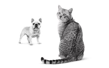 Comment les aliments humides pour chiens et chats sont-ils fabriqués?