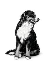 Les avantages des aliments humides pour votre chien