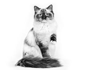 Comment veiller à une hydratation suffisante de mon chat?