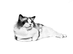 Gestion du bac à litière pour chat