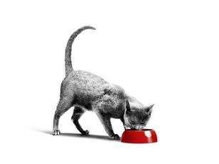 Quelle quantité de nourriture puis-je donner à mon chat ?