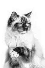 Avantages d'une alimentation humide pour le chat