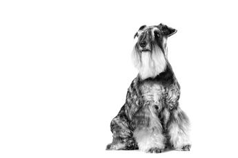 Les problèmes urinaires chez le chien : que faire ?
