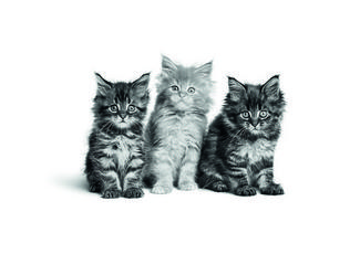 La nutrition santé pour votre chat ! À quoi devez-vous prêter attention ?