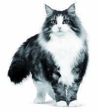 Des conseils et des faits utiles sur votre chat
