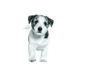 Conseils lors de l'arrivée d'un chien de race à la maison