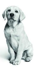 Le chien, fidèle ami de l'homme