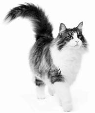 Conseils pour donner un médicament à votre chat