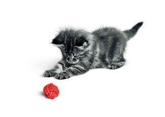 Comment socialiser mon chaton ?